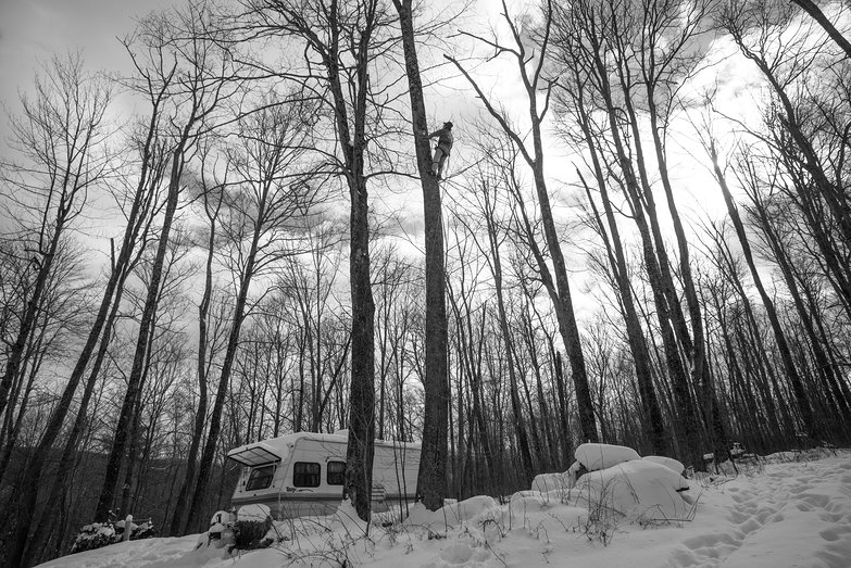 Bob Climbing Tree