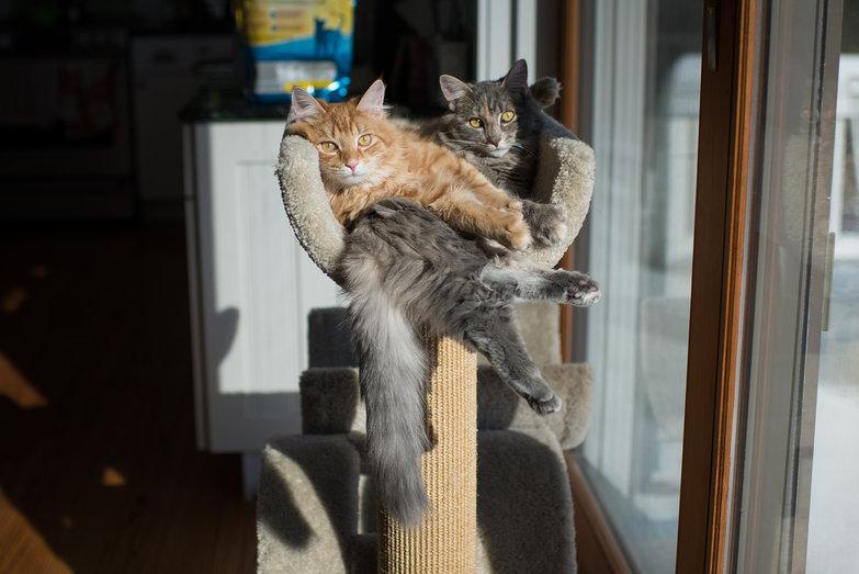 Milo & Gracie