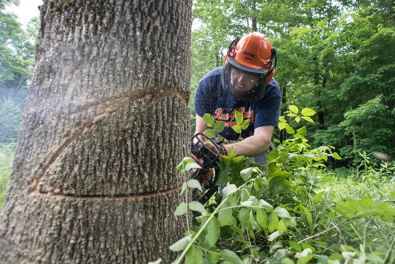 Dan Felling Tree