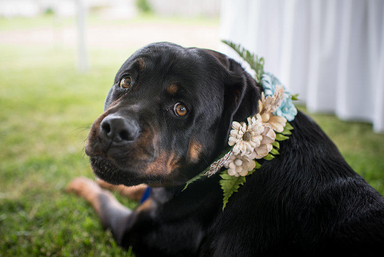 Osita Dressed Up for the Wedding
