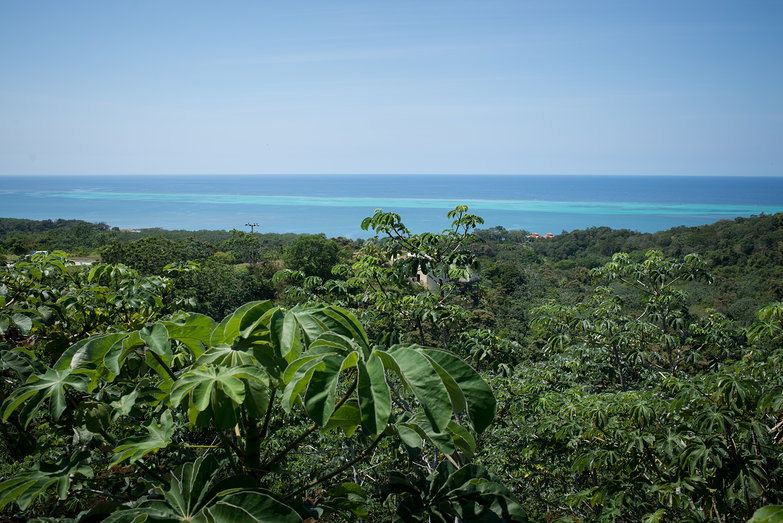 Roatan Overlook