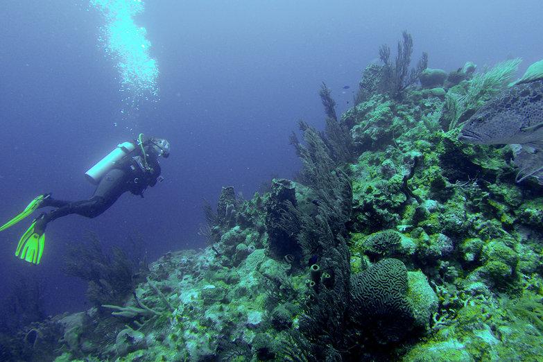 Scuba Diving w/Big Fish (by Pete)