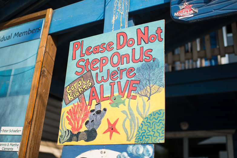 Coral Rights Sign: Please Do Not Step On Us, We're Alive