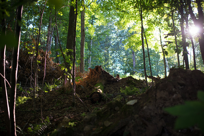 Sunlight in Woods (with Upended Tree Trunk)
