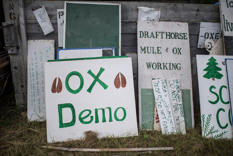 Common Ground Country Fair Ox Demo Sign
