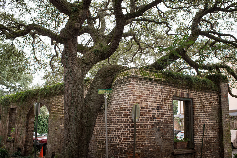 Charleston Tree Over Brick Wall