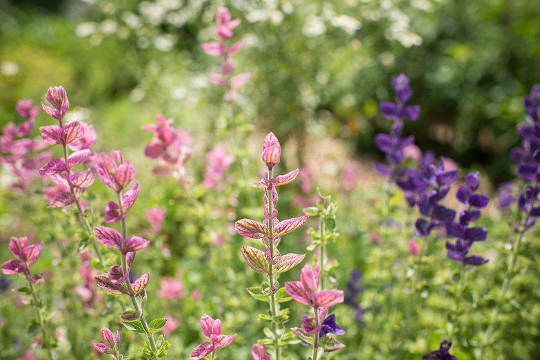 Putney Community Garden Flowers