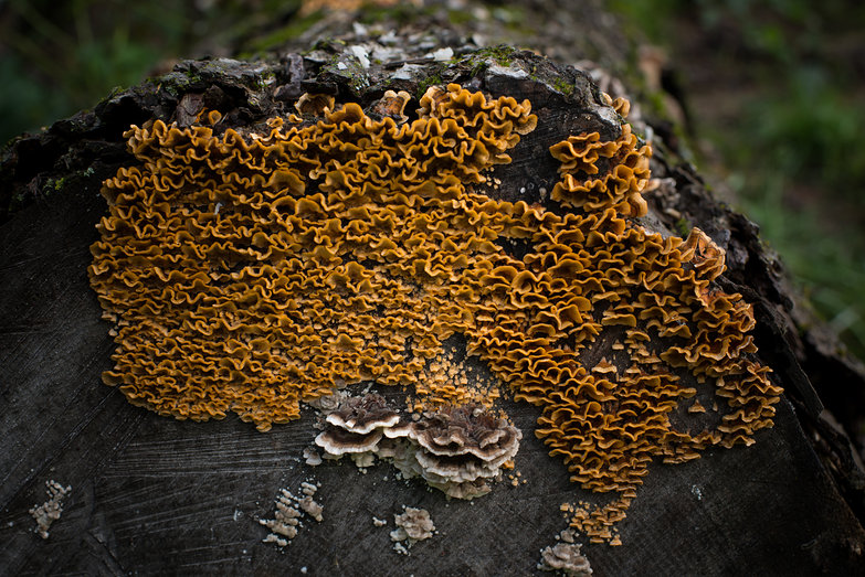 Fungus on Rotting Log