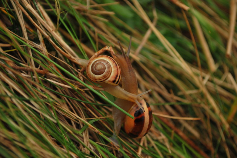 Intertwined Snails