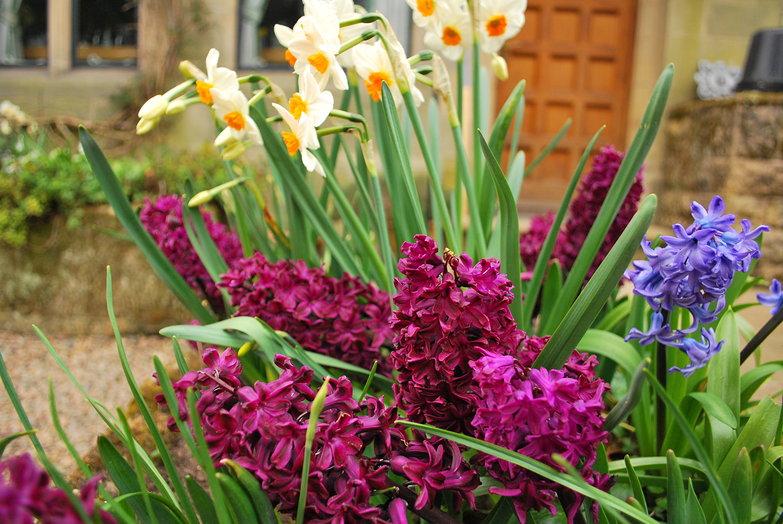 Hedgeley Estate Flowers