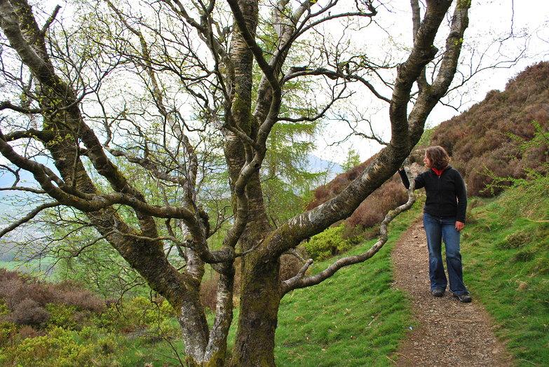 Tara, Tree & Trail