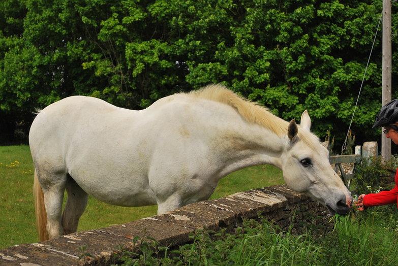 Tara Feeding a Horse