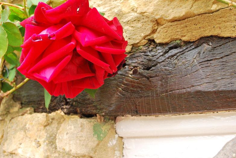 Rose & Spiderweb