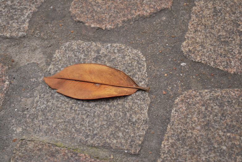 Nantes Leaf