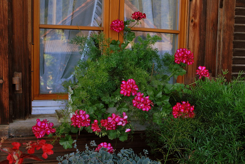 Flowers & Window