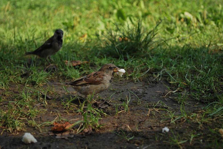 Snacking Birdie