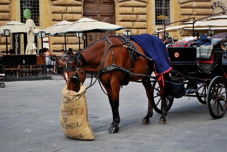 Horse Feed Bag