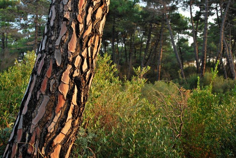Free Camp Tree