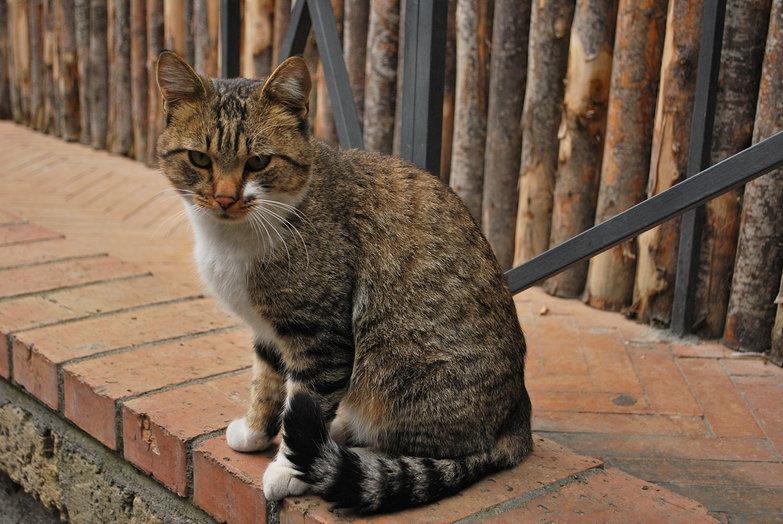 Campsite Cat