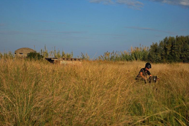 Tara in a Field