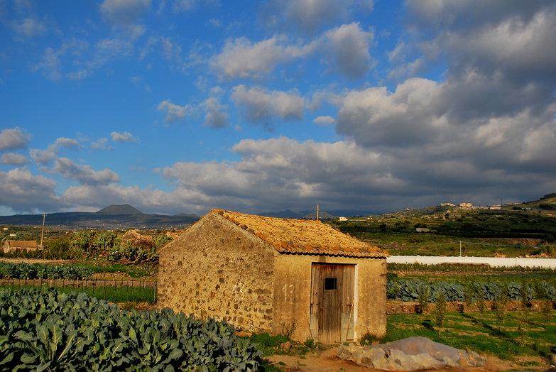 Sicilian Fields