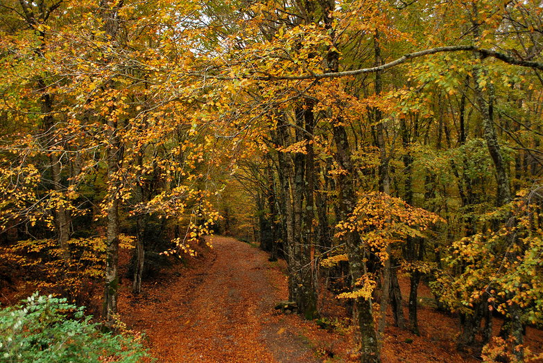 Woodland Driveway