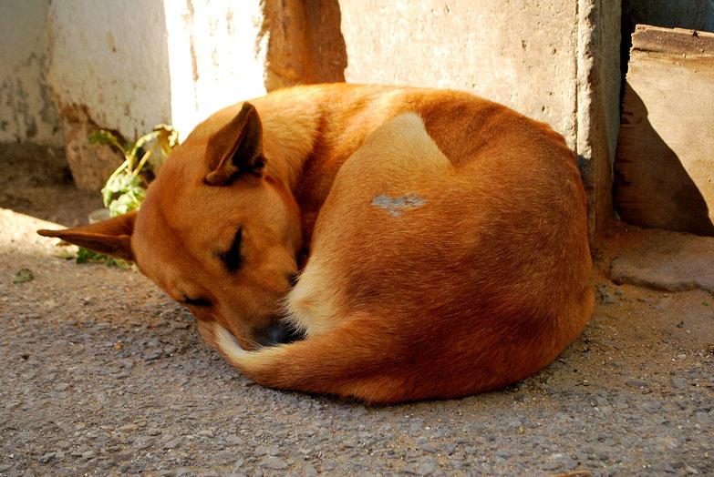 Puppy Roll