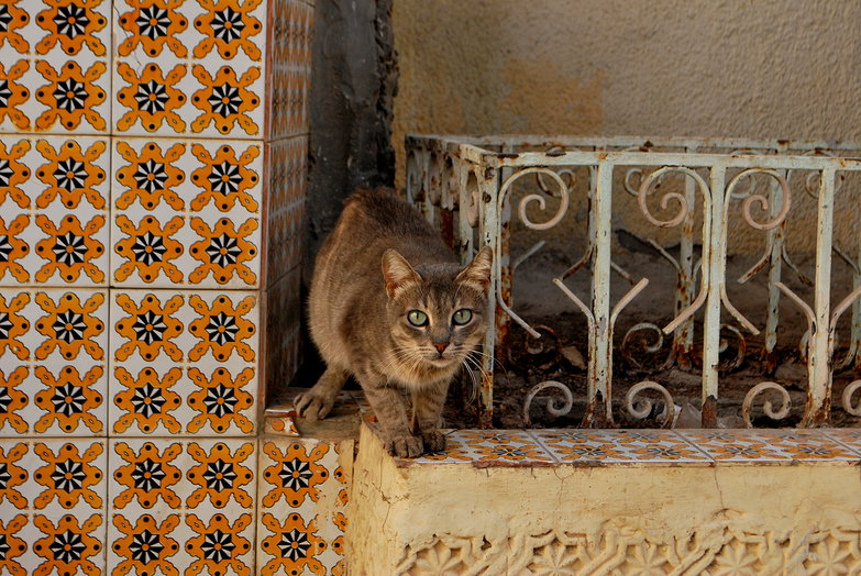 Stray Cat Staring