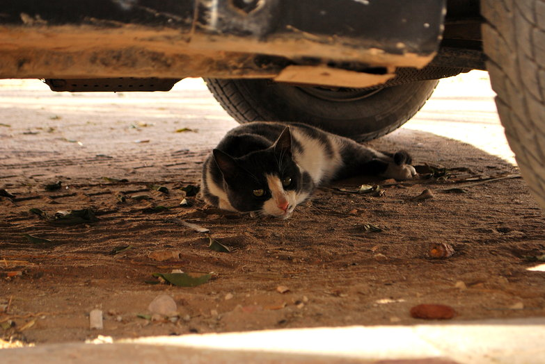 Medenine Cat Hiding from the Sun