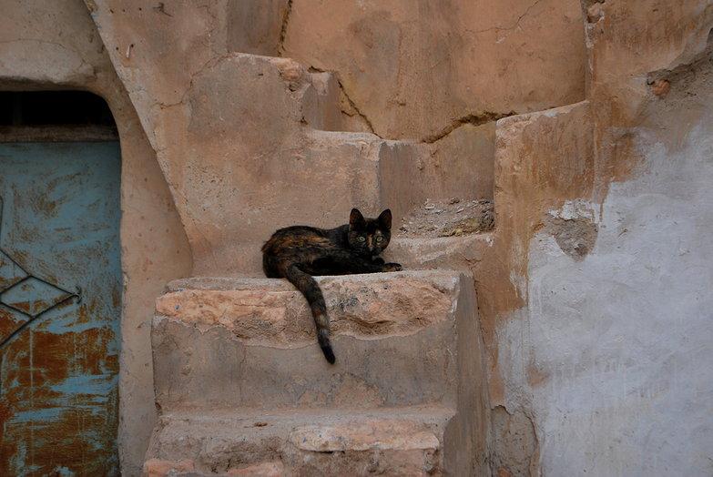 Medenine Cat