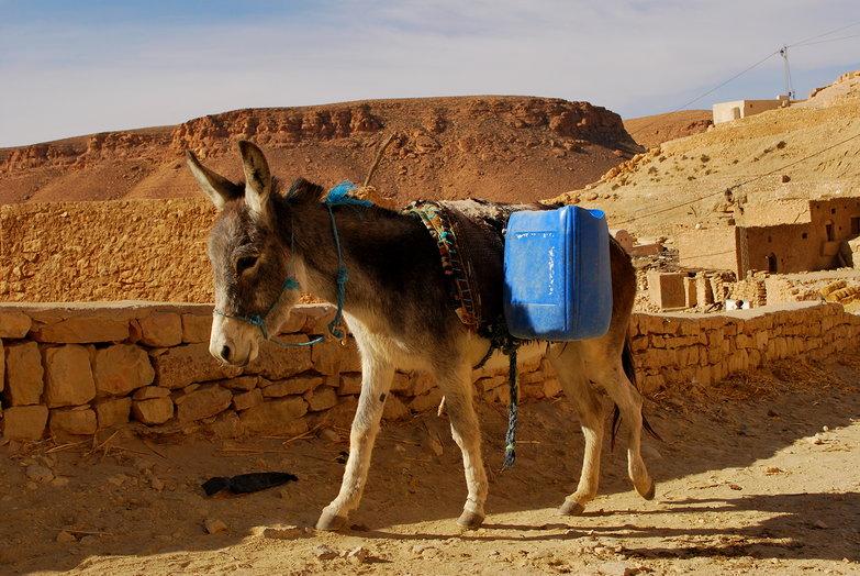 Chenini Donkey