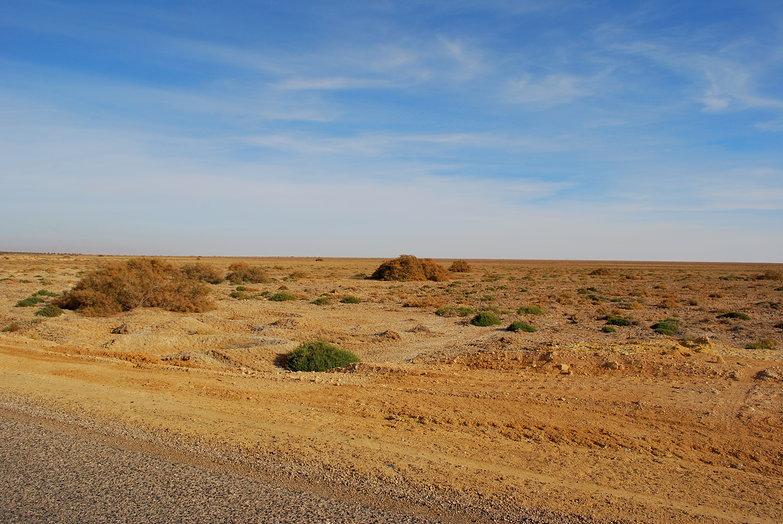 Desert Near Tozeur