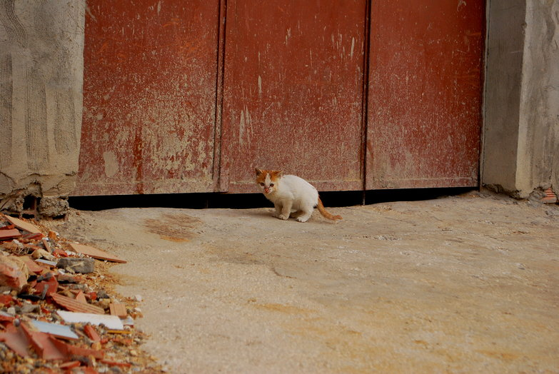 Tiny Kairouan Kitty