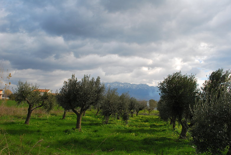 Olive Trees & Clouds