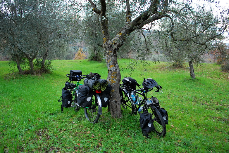 Our Bikes in an Olive Grove