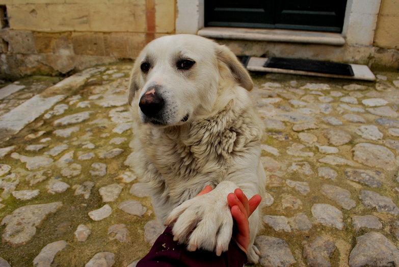 Matera Puppy Shaking