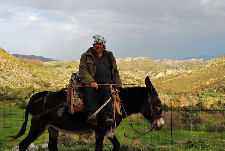 Cretan Man on Donkey