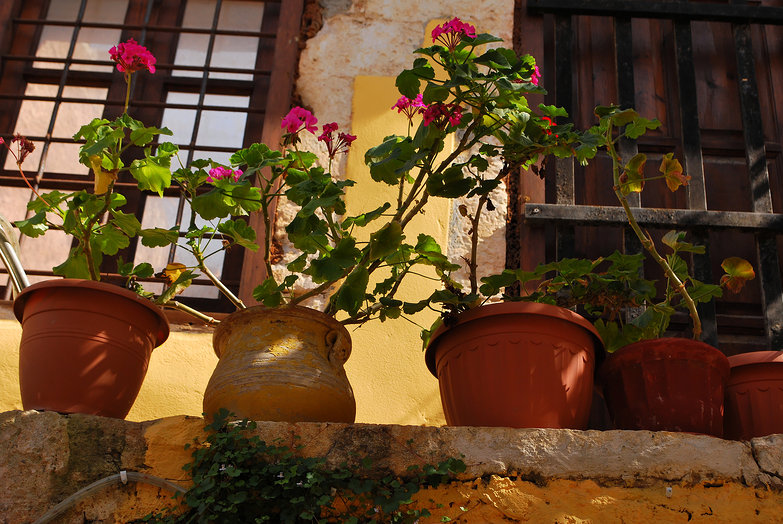 Hania Plants