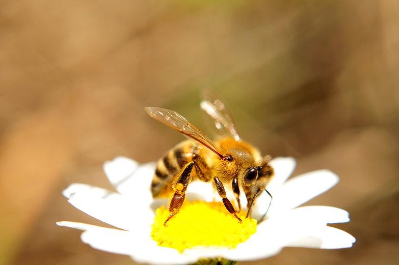 Freaky Bee