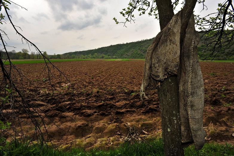 Burlap Sack & Field