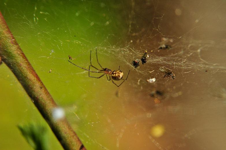 Spider's Nest