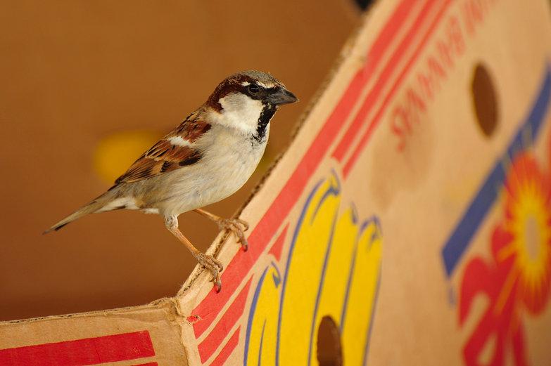Market Bird