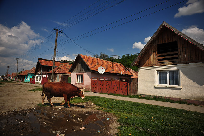 Transylvania Village Cow