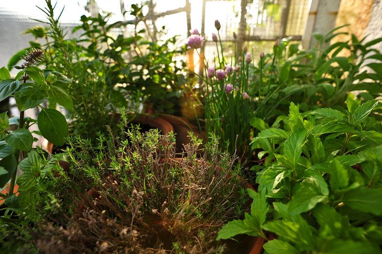 Nadine & Felix's Herb Garden