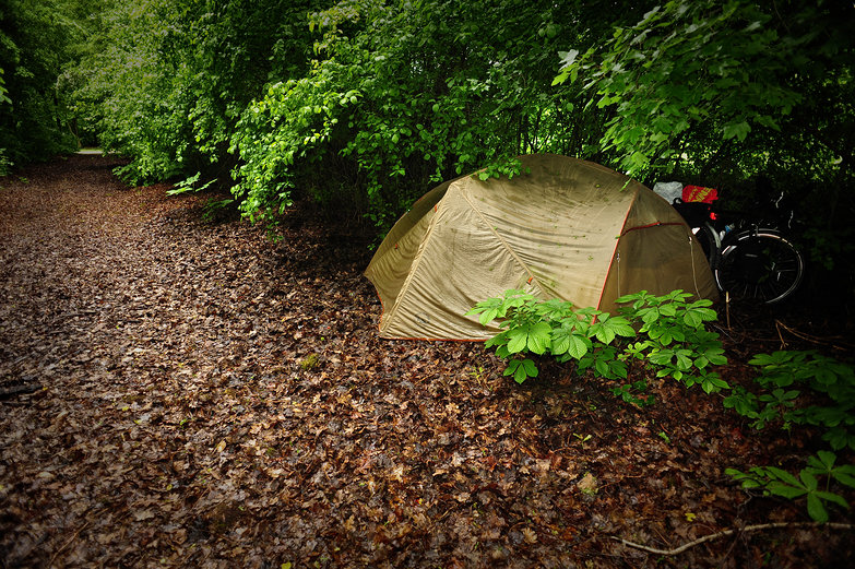 Wooded Free Camp