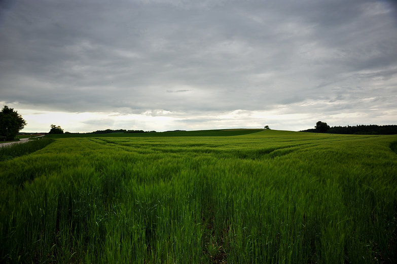 German Wheat Field