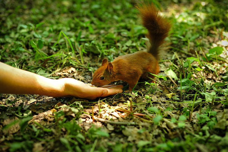 Feeding Friendly Squirrel