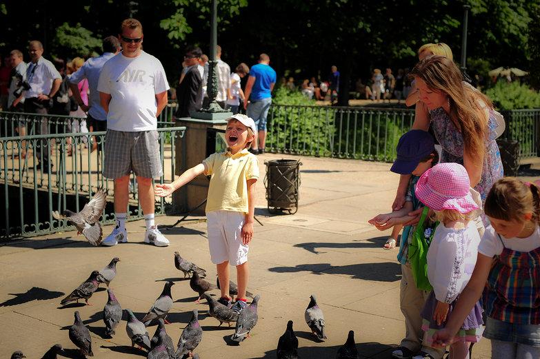 Boy & Pigeons