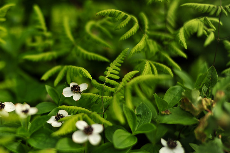 Arctic Flowers & Ferns