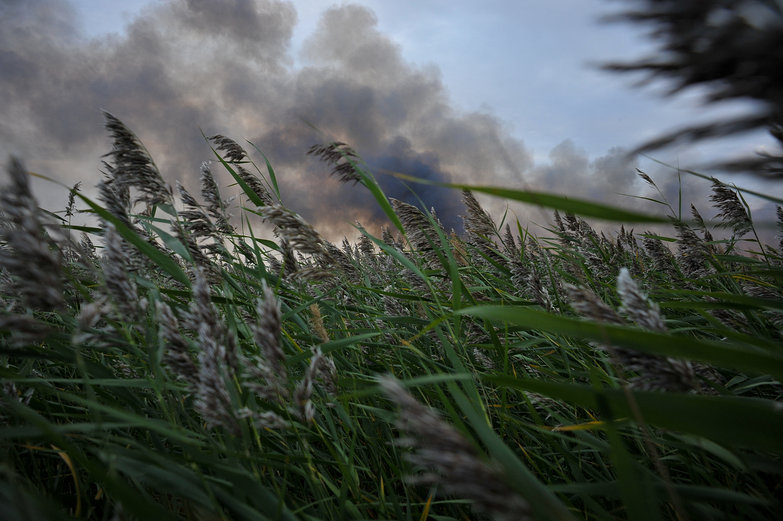 Smoke Through the Grass